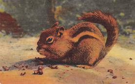 sub063485 - Chipmunk Post Card