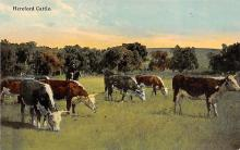 sub063489 - Cows Cattle Post Card