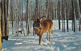 sub063521 - Deer Post Card