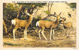 sub063523 - Deer Post Card