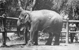 sub063537 - Elephant Post Card
