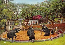 sub063539 - Elephant Post Card