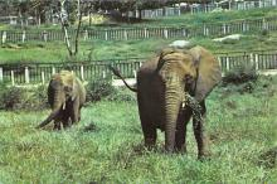 sub063541 - Elephant Post Card