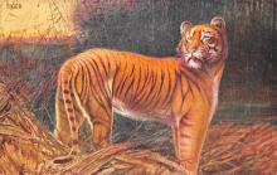 sub063603 - Lion Post Card