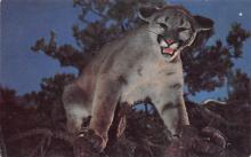 sub063605 - Lion Post Card