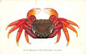 sub063615 - Lobsters Post Card