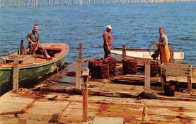 sub063629 - Lobsters Post Card