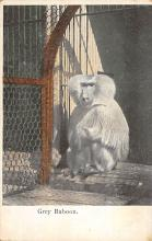 sub063639 - Monkey Post Card