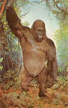 sub063643 - Gorilla Post Card