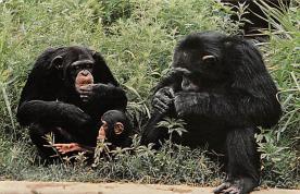 sub063645 - Monkey Post Card