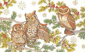sub063689 - Owl Post Card
