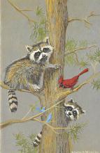 sub063693 - Owl Post Card