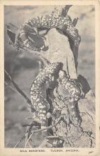 sub063807 - Snake Reptile Post Card