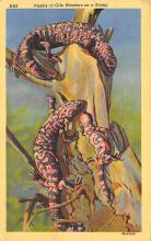 sub063811 - Snake Reptile Post Card