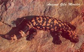 sub063813 - Reptile Post Card