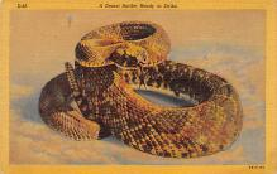 sub063815 - Snake Reptile Post Card