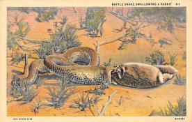 sub063817 - Snake Reptile Post Card