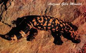 sub063819 - Reptile Post Card