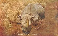 sub063831 - Rhino, Hippo Post Card