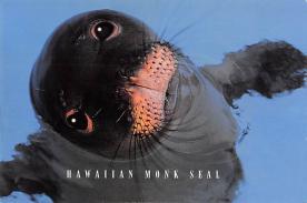 sub063843 - Seal Post Card