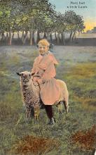 sub063847 - Sheep Post Card