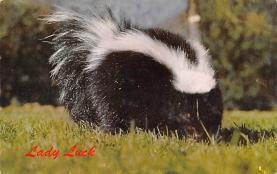sub063849 - Skunk Post Card