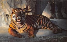 sub063851 - Tiger Post Card
