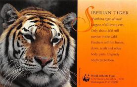 sub063855 - Tiger Post Card