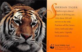 sub063857 - Tiger Post Card
