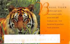 sub063859 - Tiger Post Card