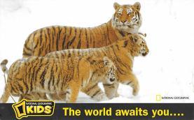 sub063861 - Tiger Post Card