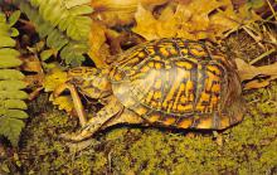 sub063865 - Turtle Post Card