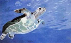 sub063867 - Turtle Post Card
