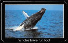 sub063869 - Whale related Post Card