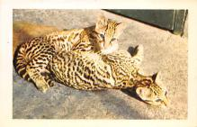 sub063903 - Zoo Post Card