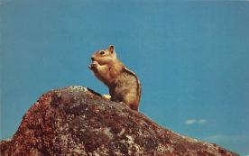 sub063909 - Squirrel Post Card