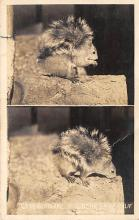 sub063931 - Cray Squirrel Post Card