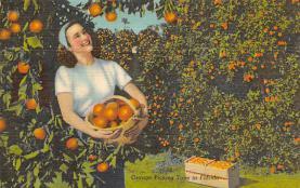 sub064403 - Orange Groves Post Card