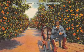 sub064405 - Orange Groves Post Card