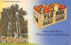sub064409 - Orange Groves Post Card
