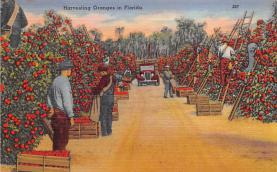 sub064411 - Orange Groves Post Card