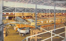 sub064419 - Orange Groves Post Card