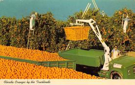 sub064473 - Orange Groves Post Card