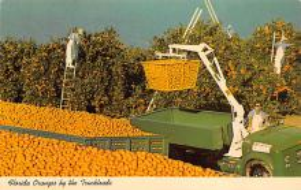 sub064475 - Orange Groves Post Card