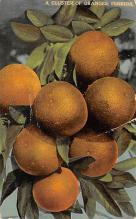 sub064491 - Orange Groves Post Card