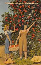 sub064499 - Orange Groves Post Card