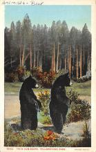 sub065379 - Yellowstone National Park Post Card