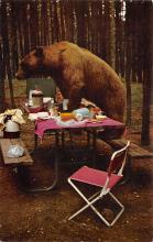 sub065411 - Yellowstone National Park Post Card
