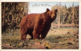sub065459 - Yellowstone National Park Post Card
