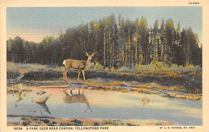 sub065127 - National Park Post Card